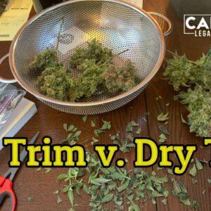 Wet Trim v. Dry Trim - Part 1 of the wet trim or dry trim challenge | How do you trim your cannabis?