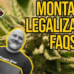 How to Get a Cannabis Business License in Montana | Montana Dispensary | Montana Marijuana Laws