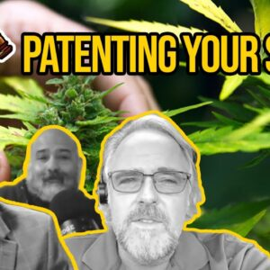 Patenting a Strain | Can You Patent Your New Cannabis Strain? | Utility Patents & Plant Patents