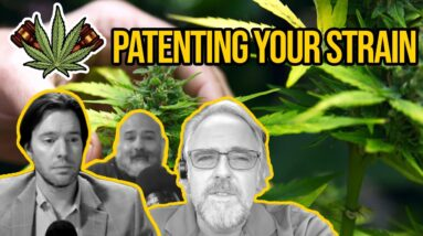 Patenting a Strain   Can You Patent Your New Cannabis Strain?   Utility Patents & Plant Patents