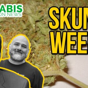 Why Cannabis Smells Like a Skunk - What causes the skunk smell in marijuana