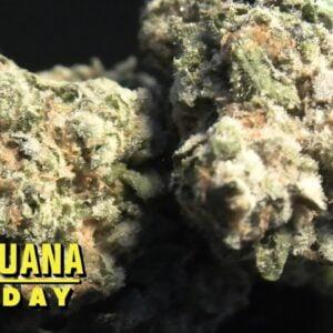 Acai Berry Gelato Marijuana Monday
