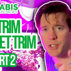 Dry Trim Vs Wet Trim Challenge - Part 2 - How to Trim Homegrown Cannabis | Legal Home Grow trimming
