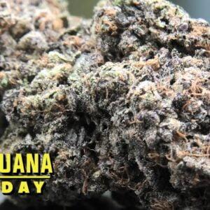 Bird Mints Marijuana Monday