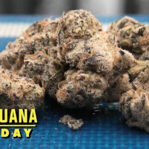 Cake Crasher #2 Marijuana Monday