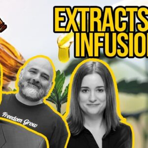 Cannabis Edibles and Tinctures: Extracts and Infusions