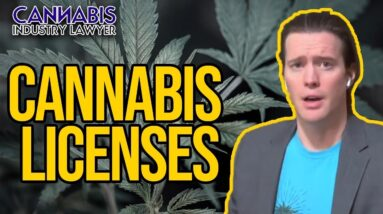 Cannabis License | What are Cannabis Licenses & How to Get One