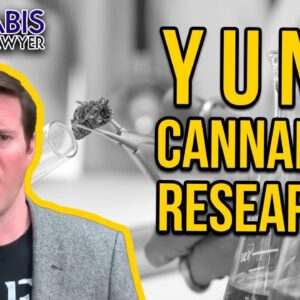 Cannabis Research - Why Marijuana Studies Do Not Get Done