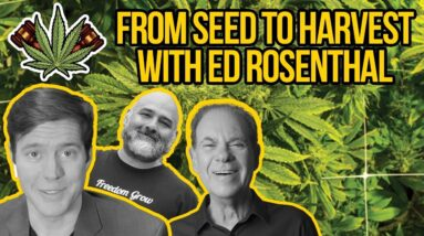 Growing Weed with Ed Rosenthal - Cannabis Seeds, Grow Lights, Curing | How to Grow Marijuana LEGALLY