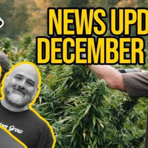 Federal Cannabis Legalization News - December 2020 - Cannabis News Roundup