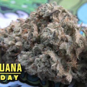 Gorilla Glue #4 Marijuana Monday