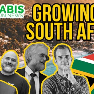Growing Legal Cannabis in South Africa