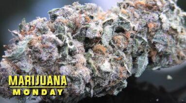 GSC Marijuana Monday