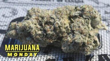 Ice Cream Cake Marijuana Monday