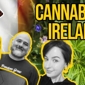 Is Cannabis Legal in Ireland? | Cannabis Legalisation in Ireland
