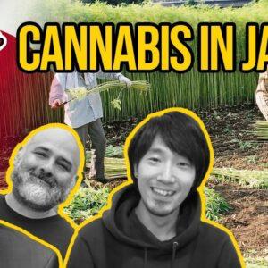 Cannabis in Japan | Is Cannabis Legal in Japan? | Marijuana in Japan | CBD in Japan