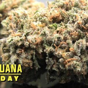 Jelly Donut Marijuana Monday