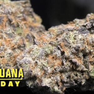 Juice Cake Marijuana Monday