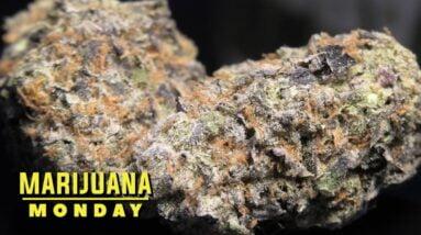 Juice Cake Marijuana Monday
