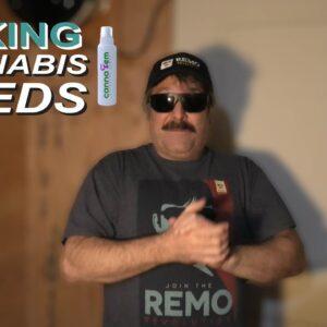 Making Cannabis Seeds with Canna Fem Spray