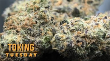 Meat Breath Toking Tuesday