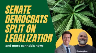 Senate Democrats Split Over Legalizing Weed and More Cannabis Legalization News