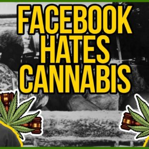 Cheech and Chong got kicked off Facebook! - Cannabis needs trusted media and platforms