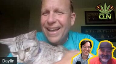 Cat interrupts State Senator zoom meeting   Cats on Zoom Interrupting for no reason
