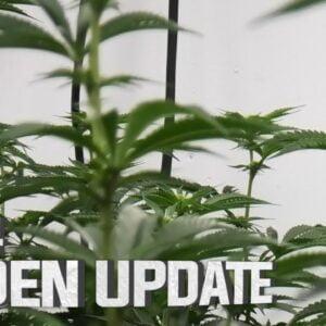 Remo's Garden Update (Day 14)