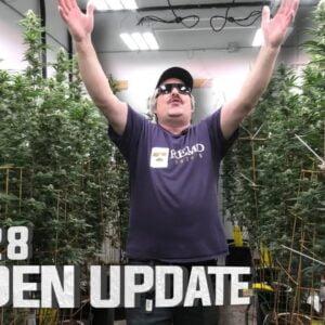Remo's Garden Update (Day 28 Flower)