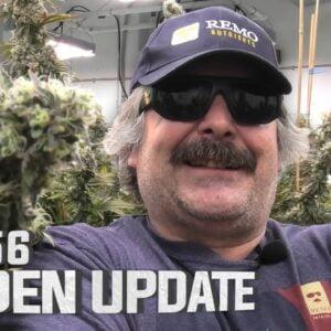 Remo's Garden Update (Day 56 Flower)