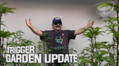 Remo's Garden Update (TRIGGER DAY)