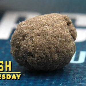 Rocket Hash Wednesday