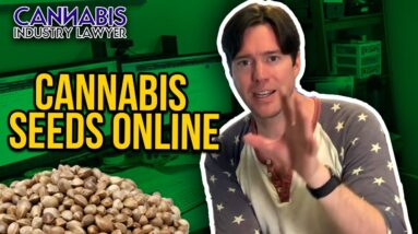 Are Online Cannabis Seeds Legal? Where to get cannabis seeds online. | Marijuana & Weed Seeds online