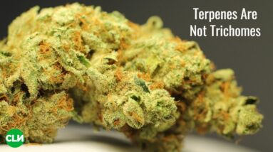 Terpenes Are Not Trichomes