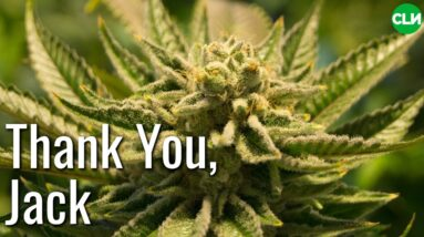 Thank You Jack Herer - 10th Anniversary of Passing