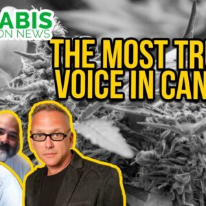 The Fresh Toast | Cannabis Consumer Trends