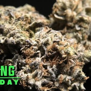 The One Toking Tuesday