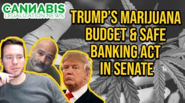 Trump's Marijuana Budget & SAFE Banking Act in Senate