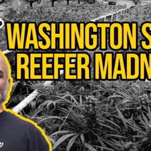 Washington State Reefer Madness HB1463 | Cannabis Concentrate Ban Bill