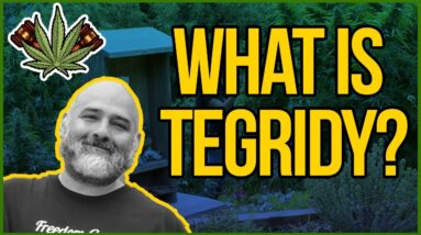 What is Tegridy? - Influencer Culture in the Cannabis Space