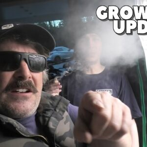 Youngblood's LED Grow Tent Update (TRIGGER WEEK)