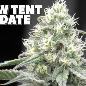 Youngblood's LED Grow Tent Update (Week 5)