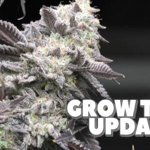 Youngblood's LED Grow Tent Update (Week 8) HARVEST!