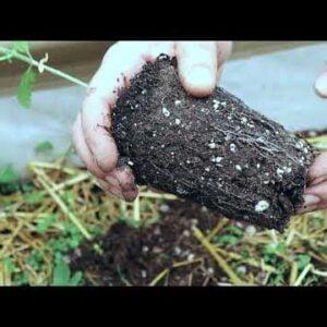 Planting & Early Veg | 5x5 indoor grow | FC-6500 LED lights Test Run |Aloe & Mushroom logs secrets