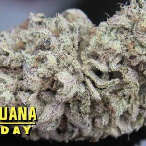 Frosted Fruit Cake Marijuana Monday