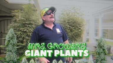 Mrs. Grower's Giant Plants Update