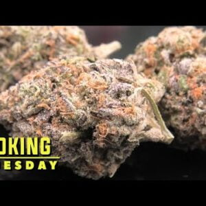 Platinum Pink Toking Tuesday