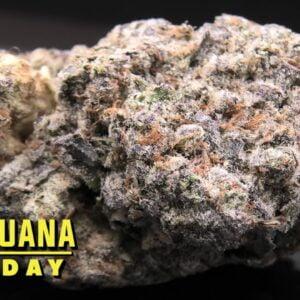 Bubba's Gift Marijuana Monday