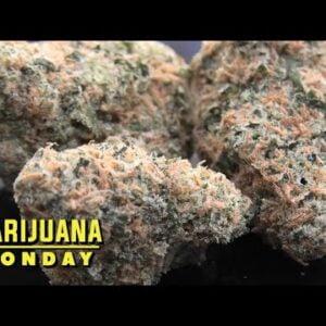 Urinal Cake Marijuana Monday
